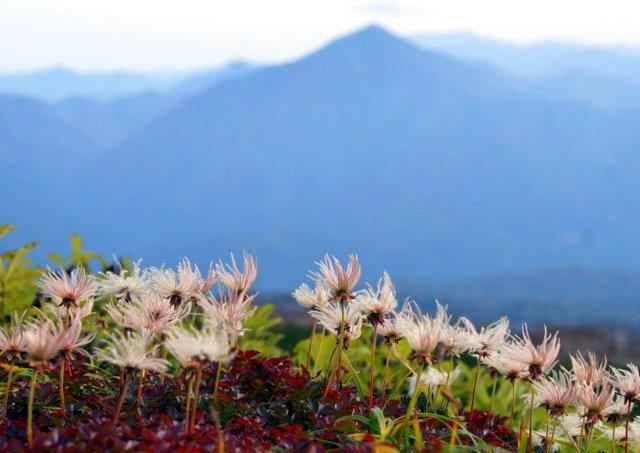 2018年9月24日(月・祝) 大雪山三色縦走「赤岳~白雲岳~緑岳」_a0345007_20434724.jpg