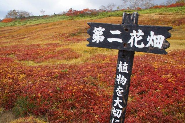 2018年9月24日(月・祝) 大雪山三色縦走「赤岳~白雲岳~緑岳」_a0345007_214911.jpg