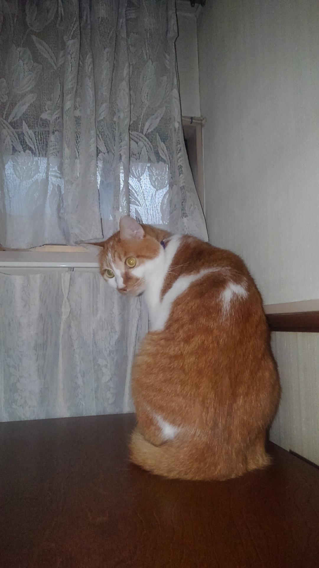 【猫】振り返り_f0141609_12381466.jpg