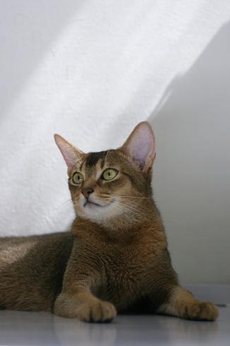 [猫的]光あるところ_e0090124_22372364.jpg