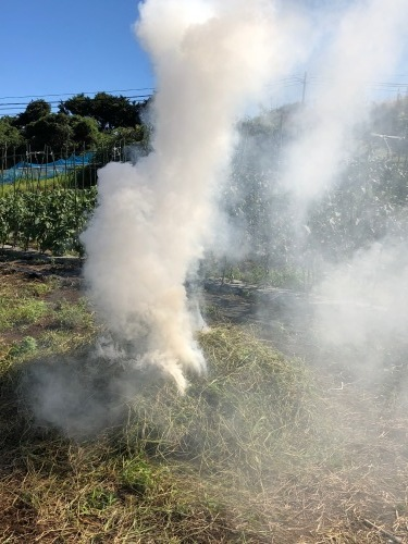 久々の晴れ 枯草を燃やすが 乾ききっていないため 凄い煙・・畑一面真っ白に・・_c0222448_12310376.jpg