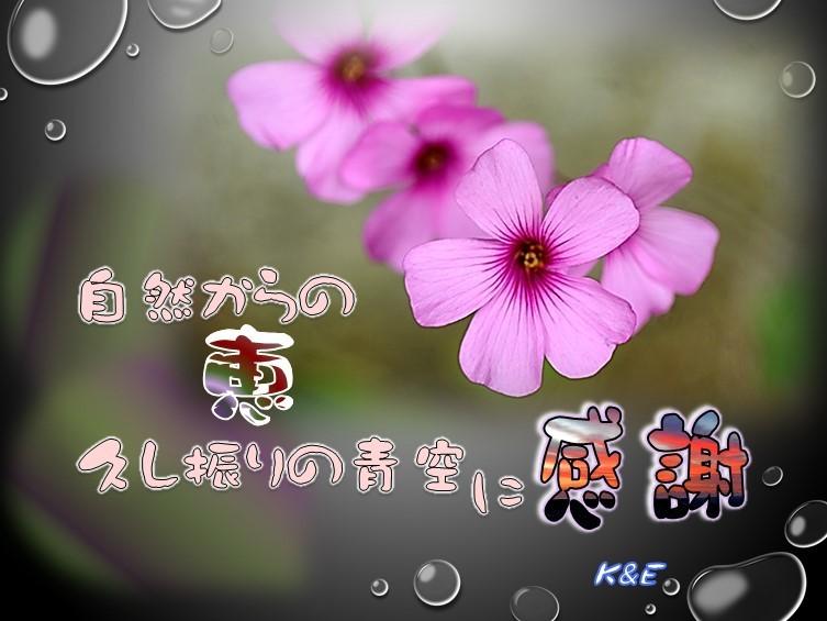 f0214467_10293130.jpg