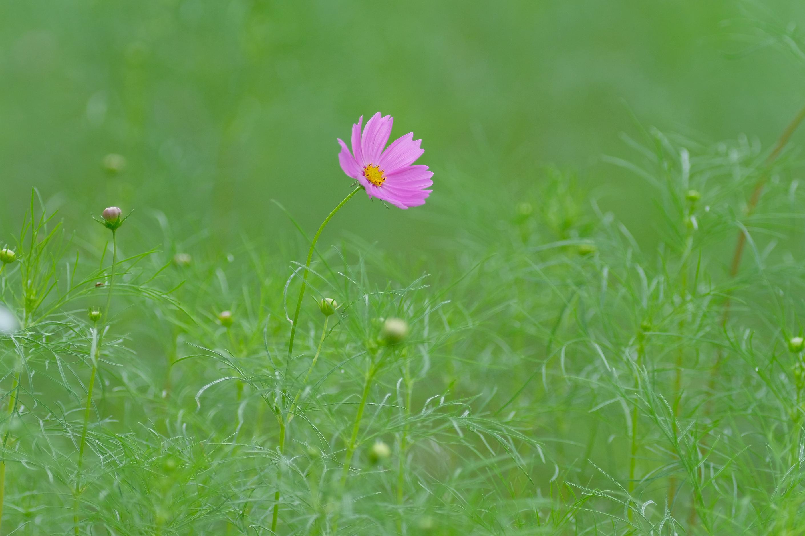 大阪市立大学理学部附属植物園_f0021869_21225722.jpg