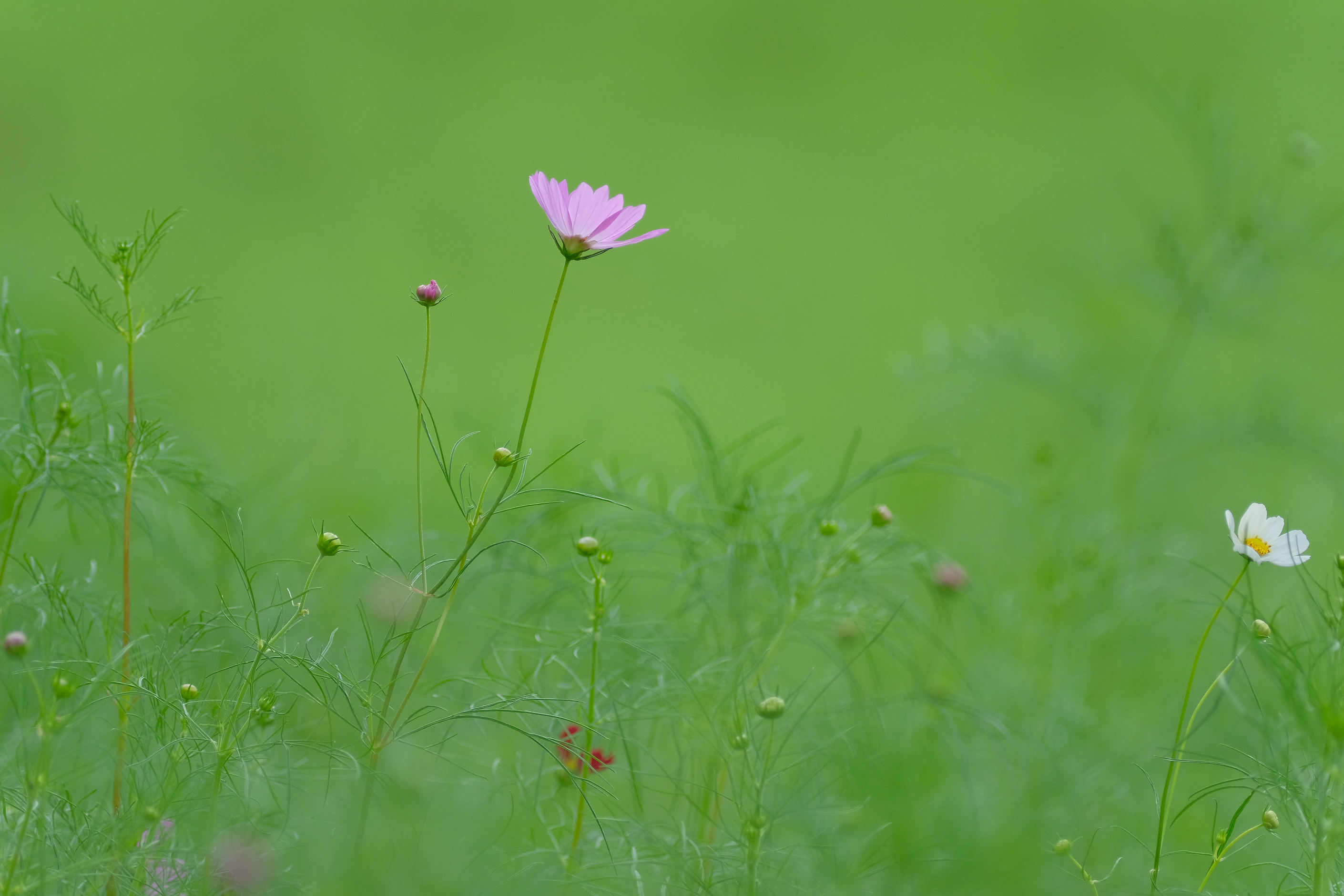 大阪市立大学理学部附属植物園_f0021869_21225824.jpg