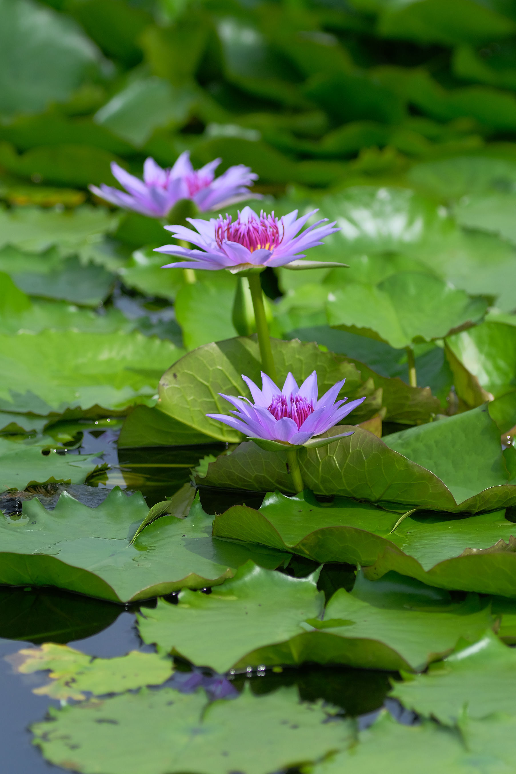 大阪市立大学理学部附属植物園_f0021869_21225836.jpg