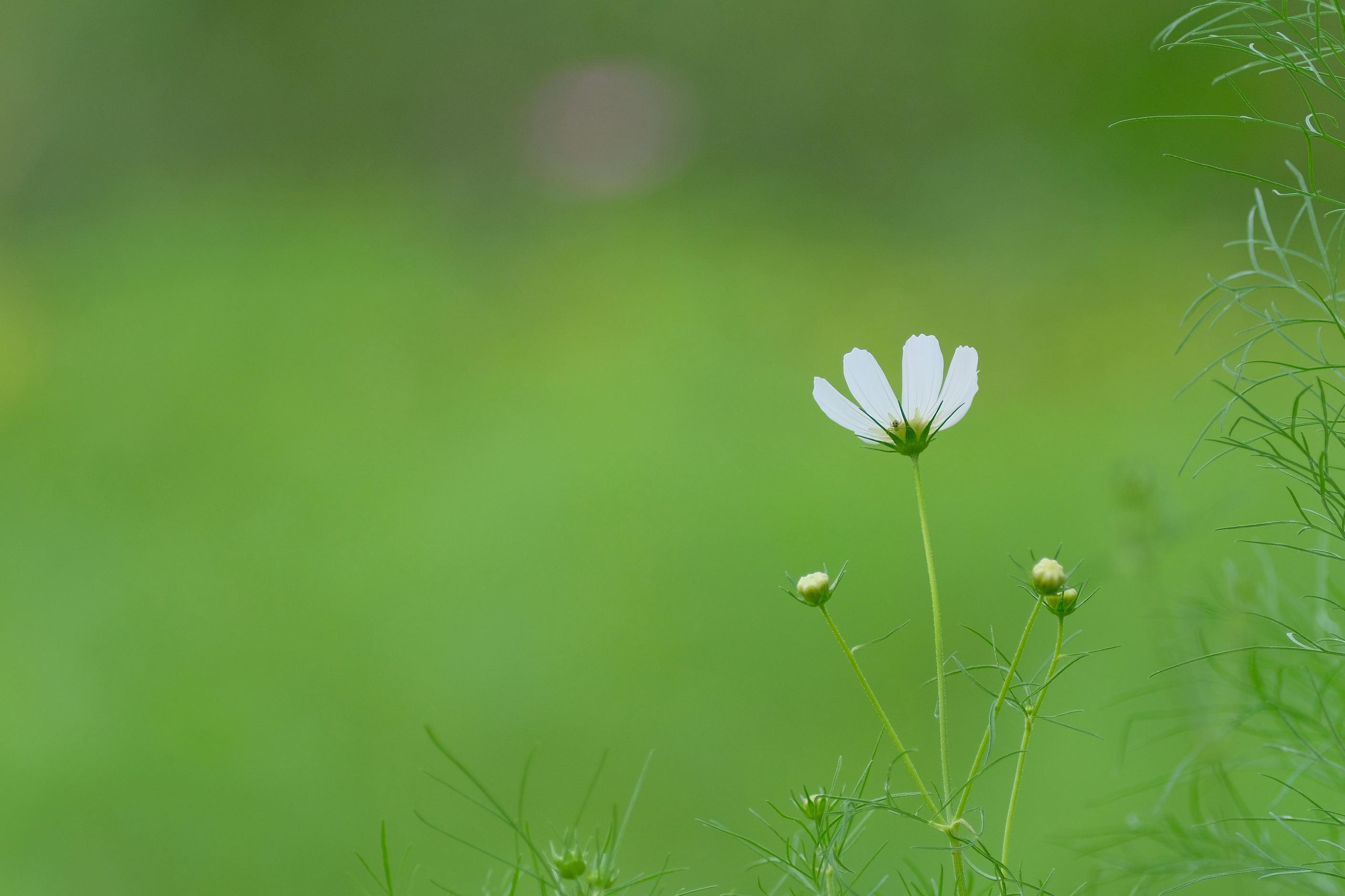 大阪市立大学理学部附属植物園_f0021869_21233211.jpg