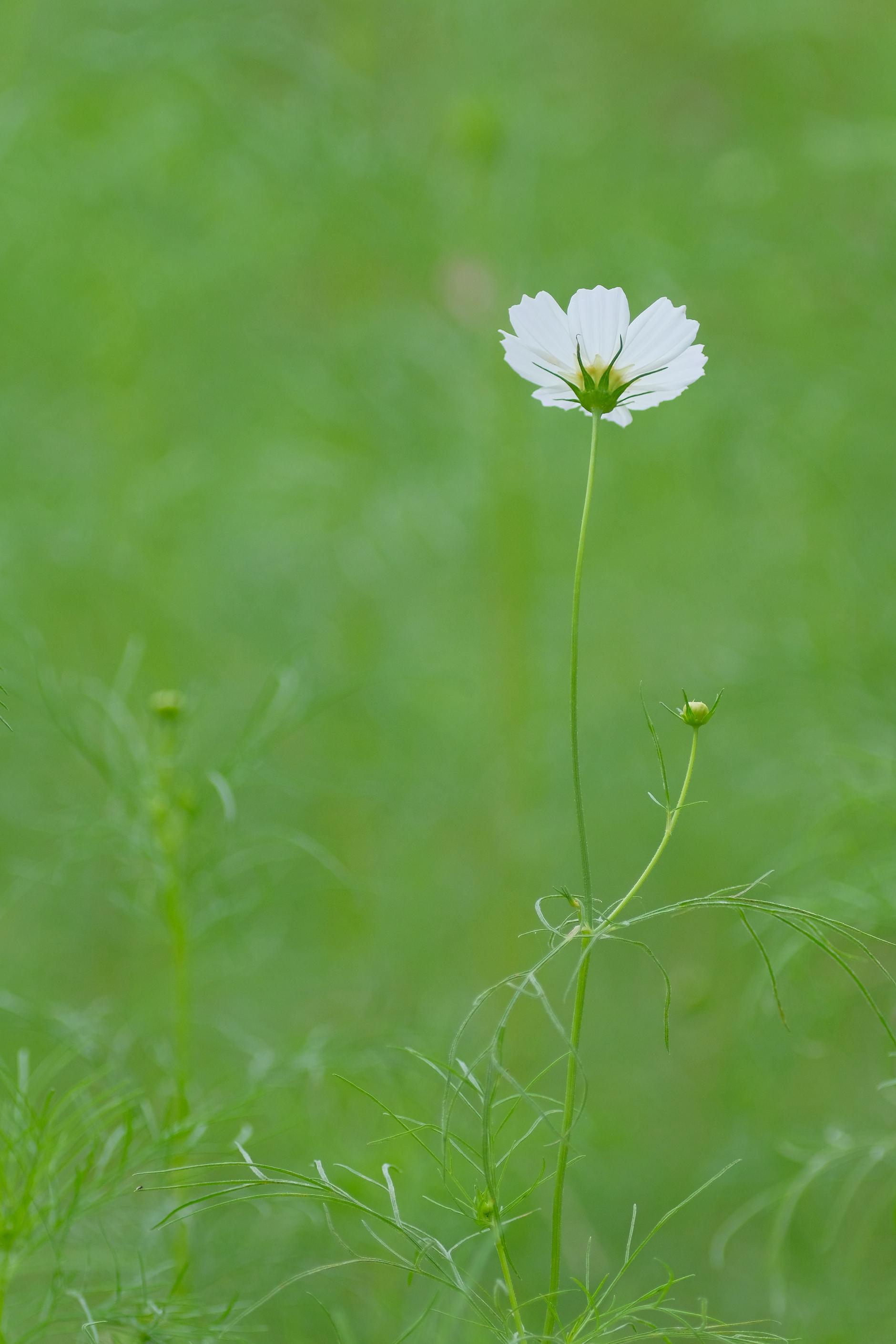 大阪市立大学理学部附属植物園_f0021869_21235680.jpg