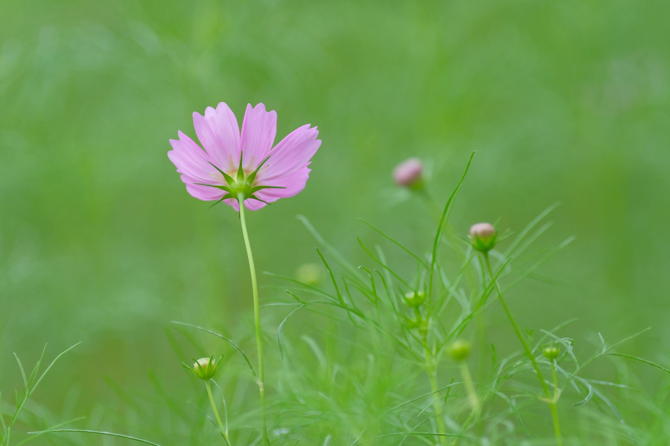 大阪市立大学理学部附属植物園_f0021869_21235746.jpg