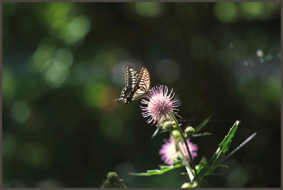 小石川植物園 -6_b0340572_17232636.jpg