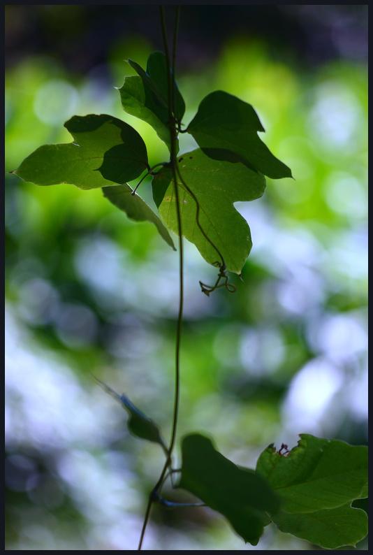 小石川植物園 -6_b0340572_17383091.jpg