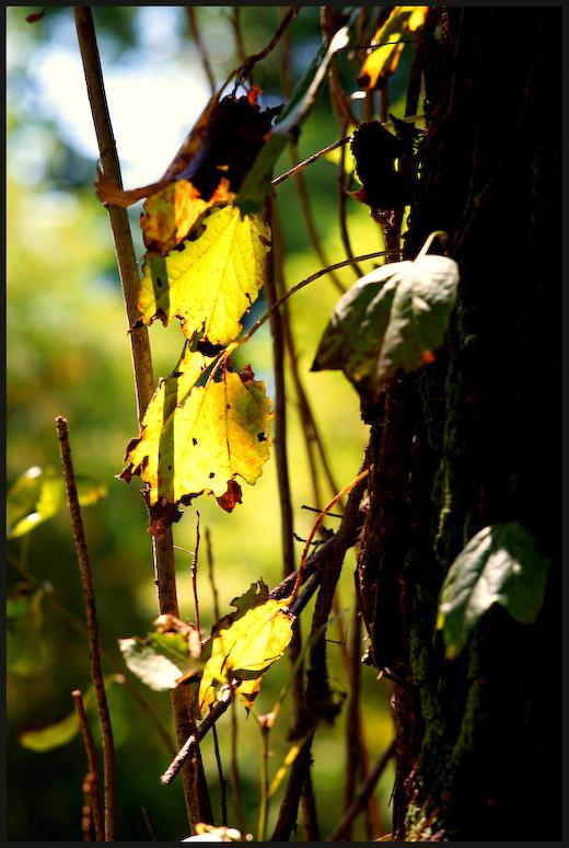 小石川植物園 -6_b0340572_17383371.jpg