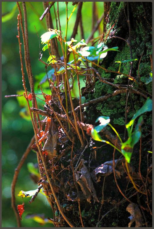 小石川植物園 -6_b0340572_17383649.jpg