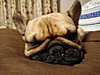 本当に、よく寝ている…_b0056476_12233134.jpg