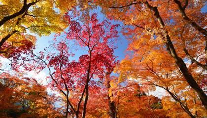 撮影に行きたい場所は限りなく.......そんな季節が近づいて......._b0194185_22315303.jpg