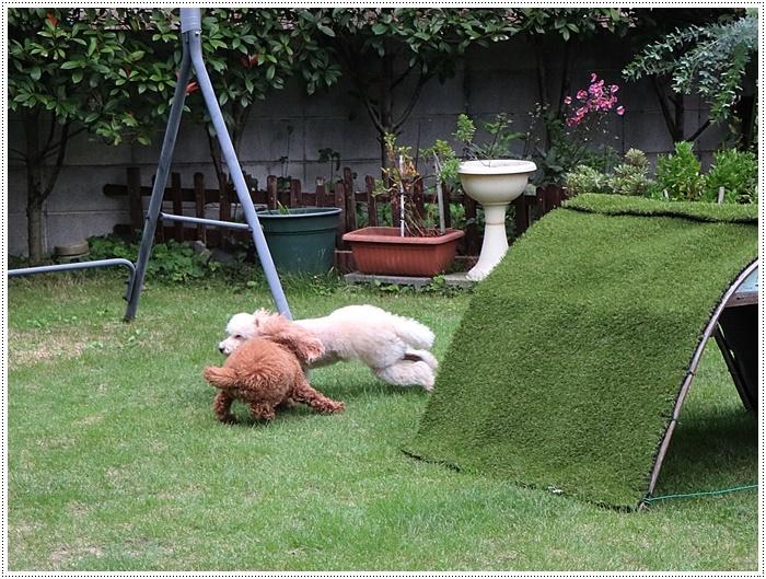 台風接近中、その前にできること、わんこたちを走らせたり庭を片付けたり。。。_b0175688_19584716.jpg