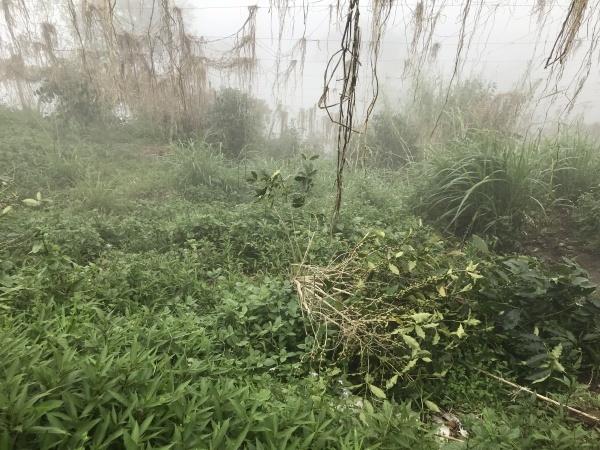 台風22号被害視察 in サグボ村_b0128901_15381398.jpg