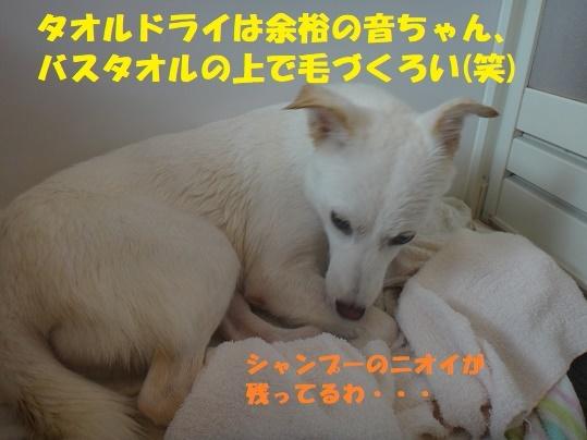 f0121712_23065556.jpg