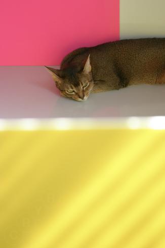 [猫的]夢_e0090124_23582545.jpg