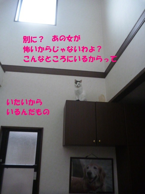 e0142430_15203971.jpg