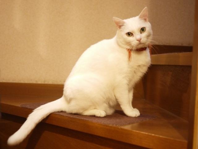 猫のお留守番 ゆきちゃん編。_a0143140_20440719.jpg