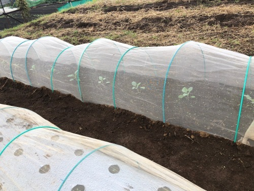 出来るだけ台風対策・・・茄子は小さくても収穫しました_c0222448_11472233.jpg