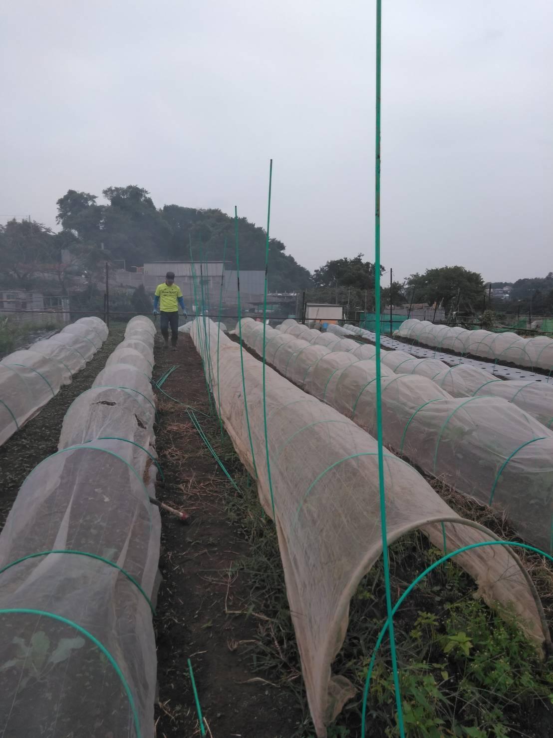 出来るだけ台風対策・・・茄子は小さくても収穫しました_c0222448_11493147.jpg