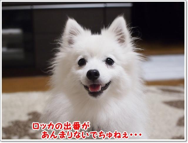 d0013149_00351105.jpg