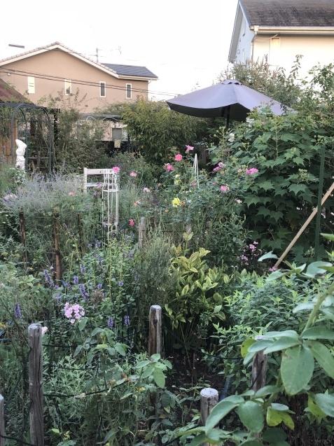 9月末の庭_a0243064_15333525.jpg