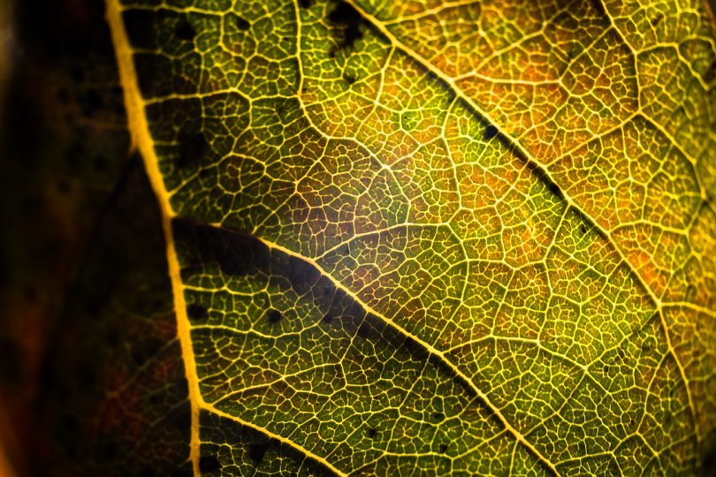 Persimmon Leaves Perplexed With Extreme Proximity_d0353489_15302611.jpg