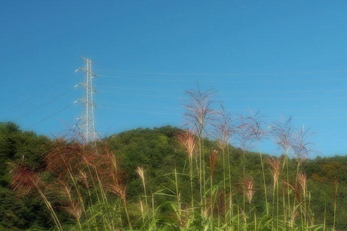 秋を探しに_d0162994_08213738.jpg