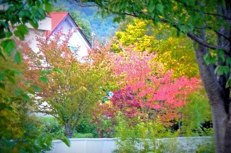 秋を探しに_d0162994_08220591.jpg