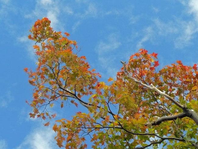 秋を探しに_d0162994_08244398.jpg