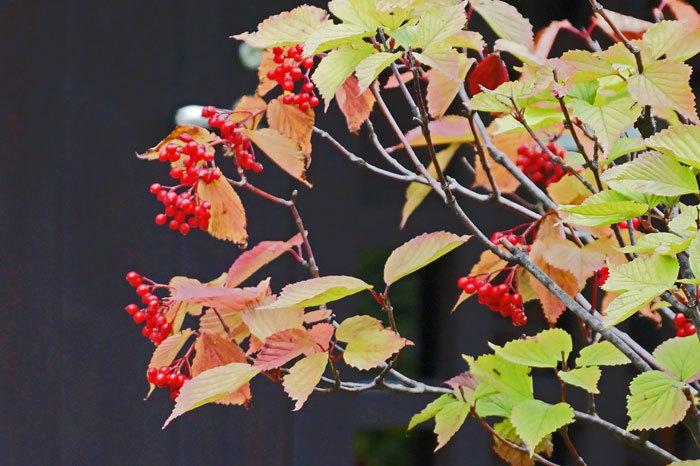 秋を探しに_d0162994_08262001.jpg