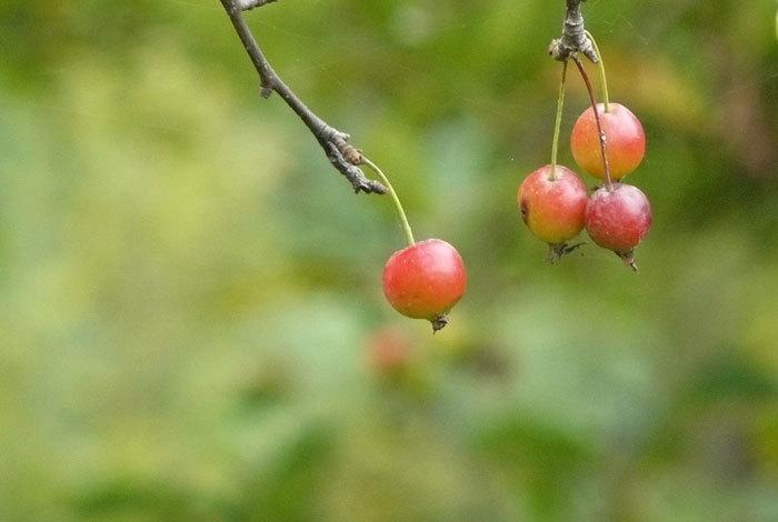 秋を探しに_d0162994_08270519.jpg