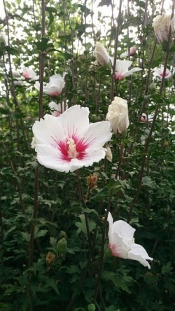 長居植物園(岡)_f0354314_17501763.jpg