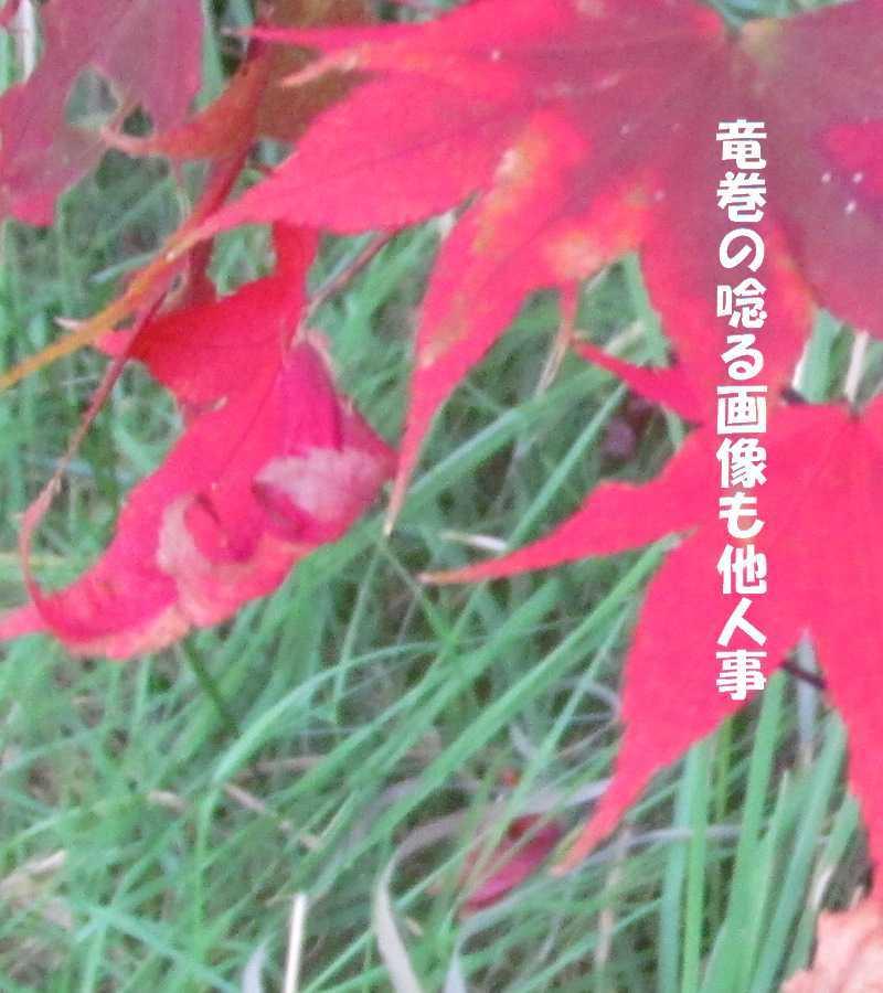 f0117041_04562754.jpg