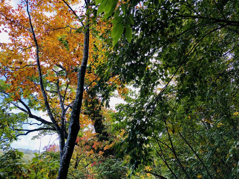 秋の苗場山_d0110562_23590704.jpg