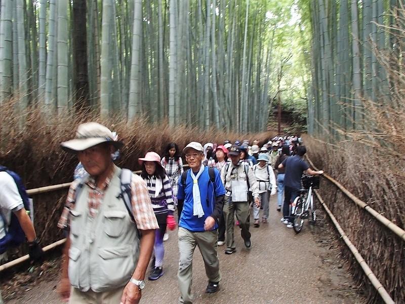 桂川東海自然歩道めぐり_b0044663_12504740.jpg