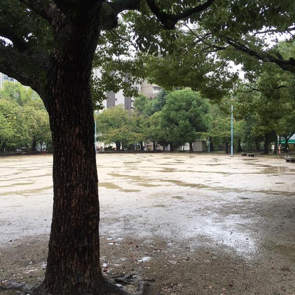 Rain Park._b0107163_10474140.jpg