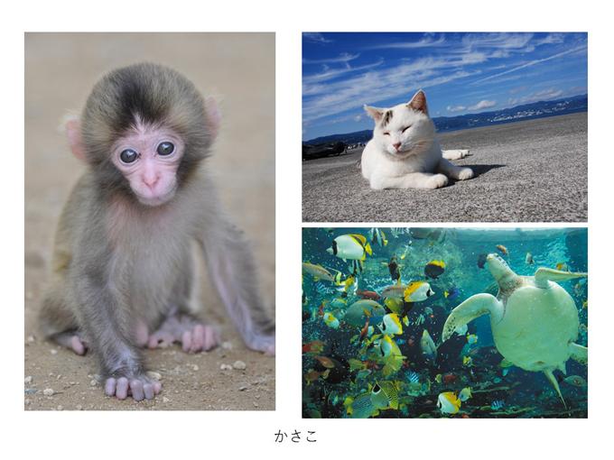 インスタ映えする写真術!第一回写真コンテスト結果発表!_e0171573_1131968.jpg