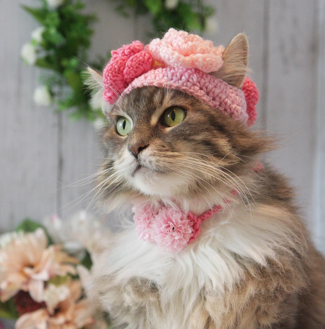 お花の帽子被ったにゃ!_d0058182_08461477.jpg