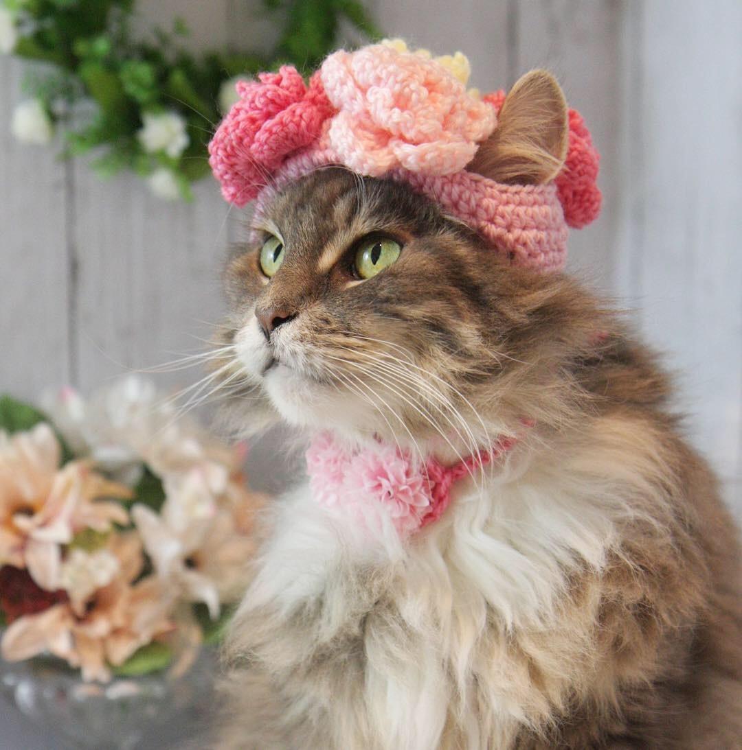お花の帽子被ったにゃ!_d0058182_08462922.jpg