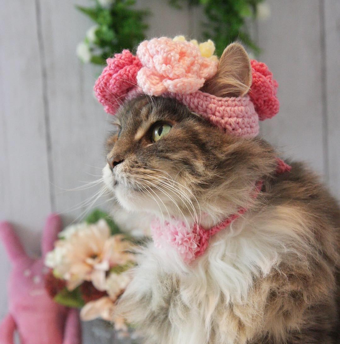 お花の帽子被ったにゃ!_d0058182_08463803.jpg