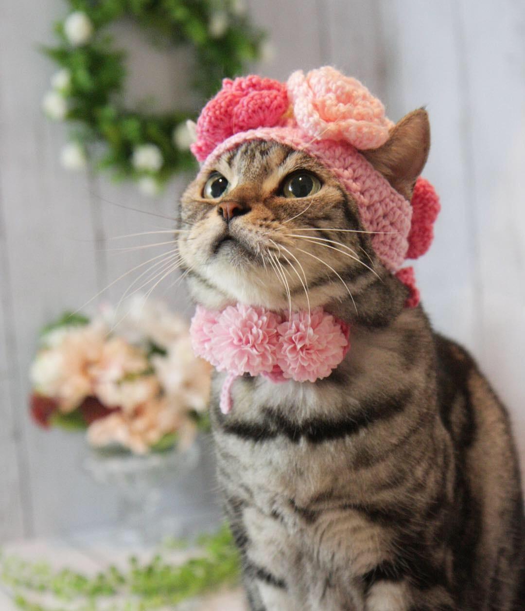 お花の帽子被ったにゃ!_d0058182_08511660.jpg