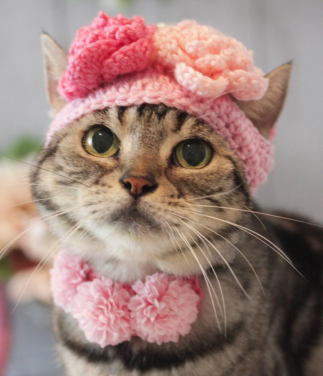 お花の帽子被ったにゃ!_d0058182_08513287.jpg