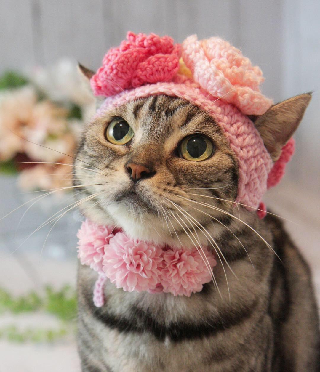 お花の帽子被ったにゃ!_d0058182_08514465.jpg
