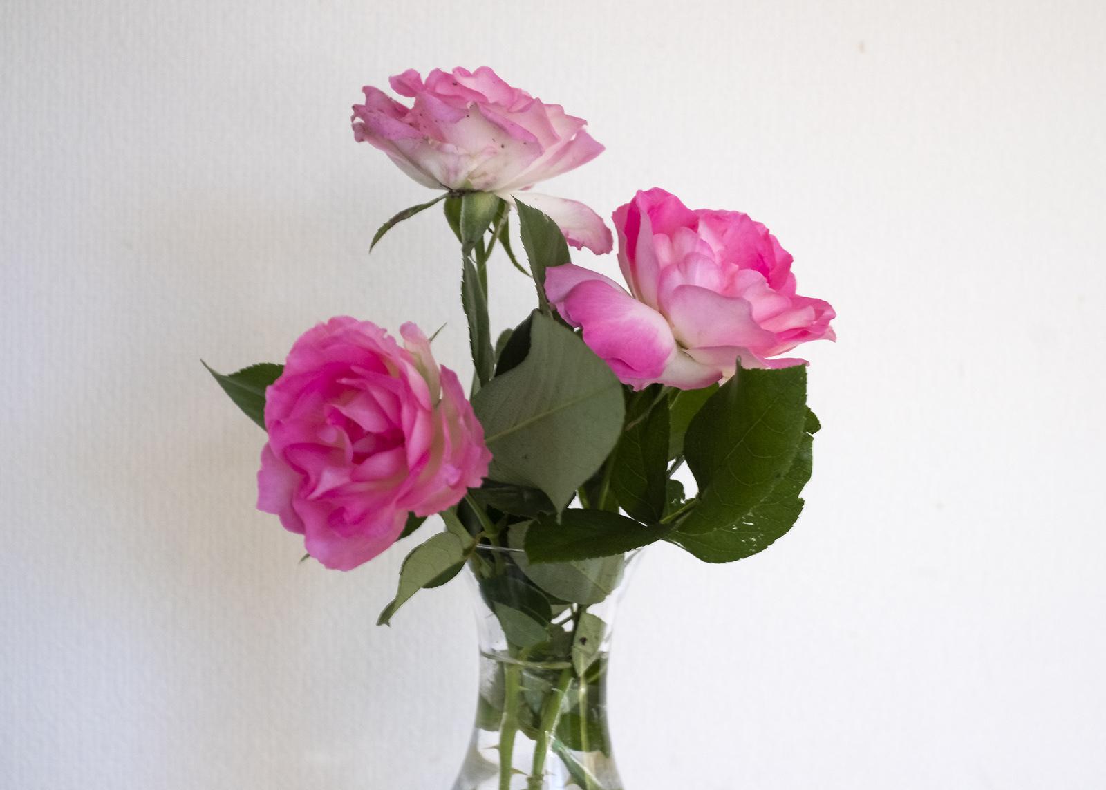 日陰に咲く花と画像容量(笑)_e0367501_12282842.jpg