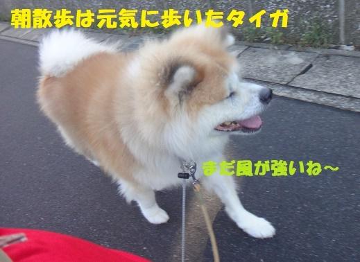 f0121712_23000940.jpg