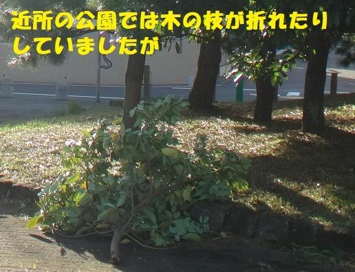 f0121712_23043554.jpg