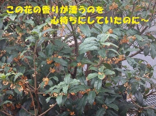 f0121712_23195943.jpg